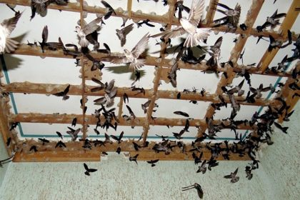 Tiềm năng nuôi chim yến tại việt nam | Website:vungdatyen.com