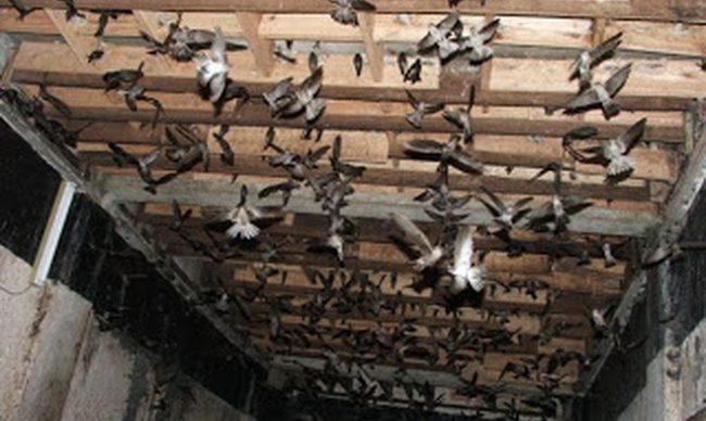 Làm giàu từ nuôi chim yến | Websit:vungdatyen.com