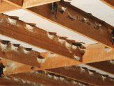 Hướng dẫn kỹ thuật tạo ẩm trong nhà nuôi yến | Website:vungdatyen.com