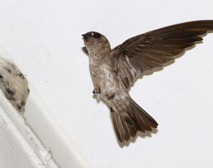 Khả năng định vị của chim yến | Website:vungdatyen.com