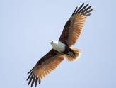 Bạn đã hiểu gì về đường bay của chim yến? | Website:vungdatyen.com